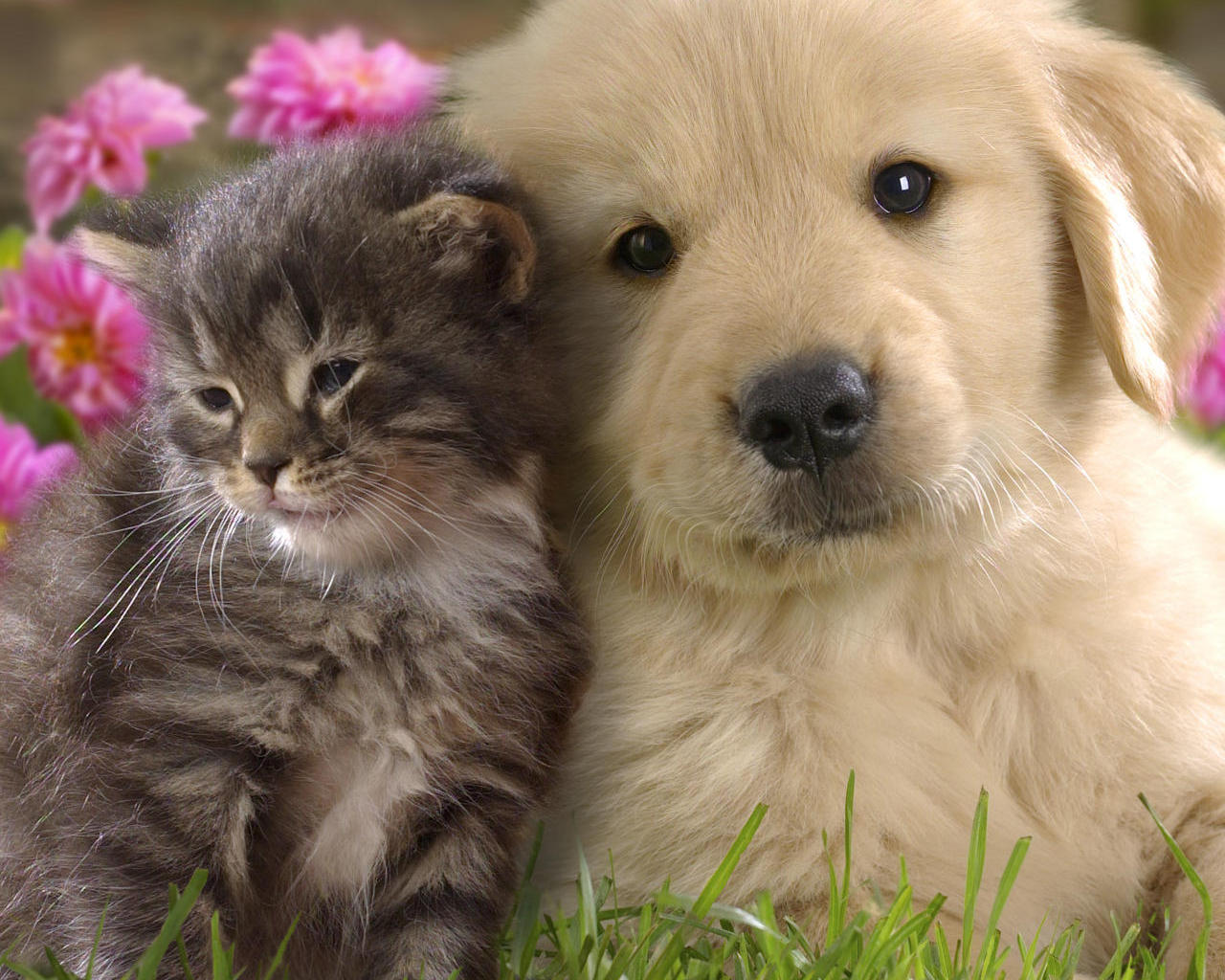 Cute Puppies And Kittens Wallpapers 1280x1024