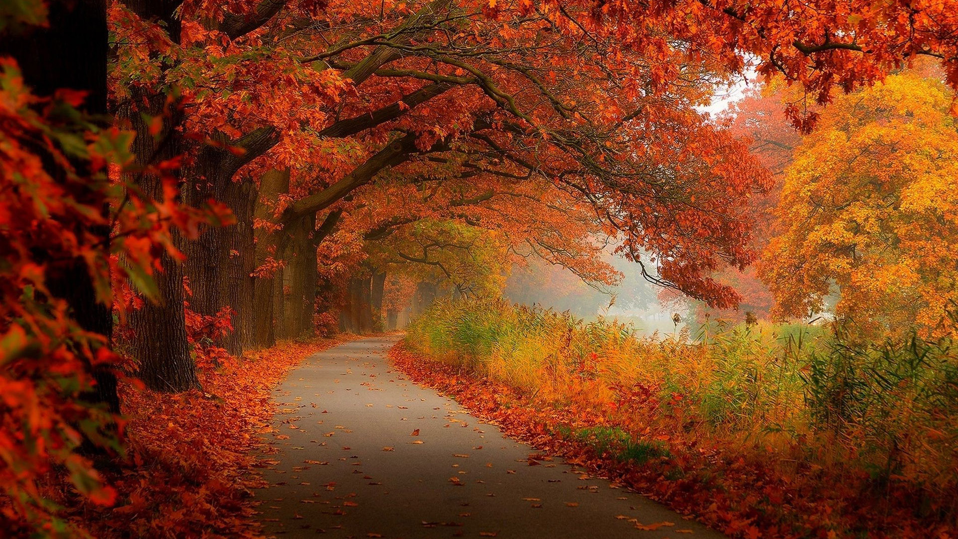 rate 1 tweet 1920x1200 nature leaf forest tree autumn fall foliage 1920x1080