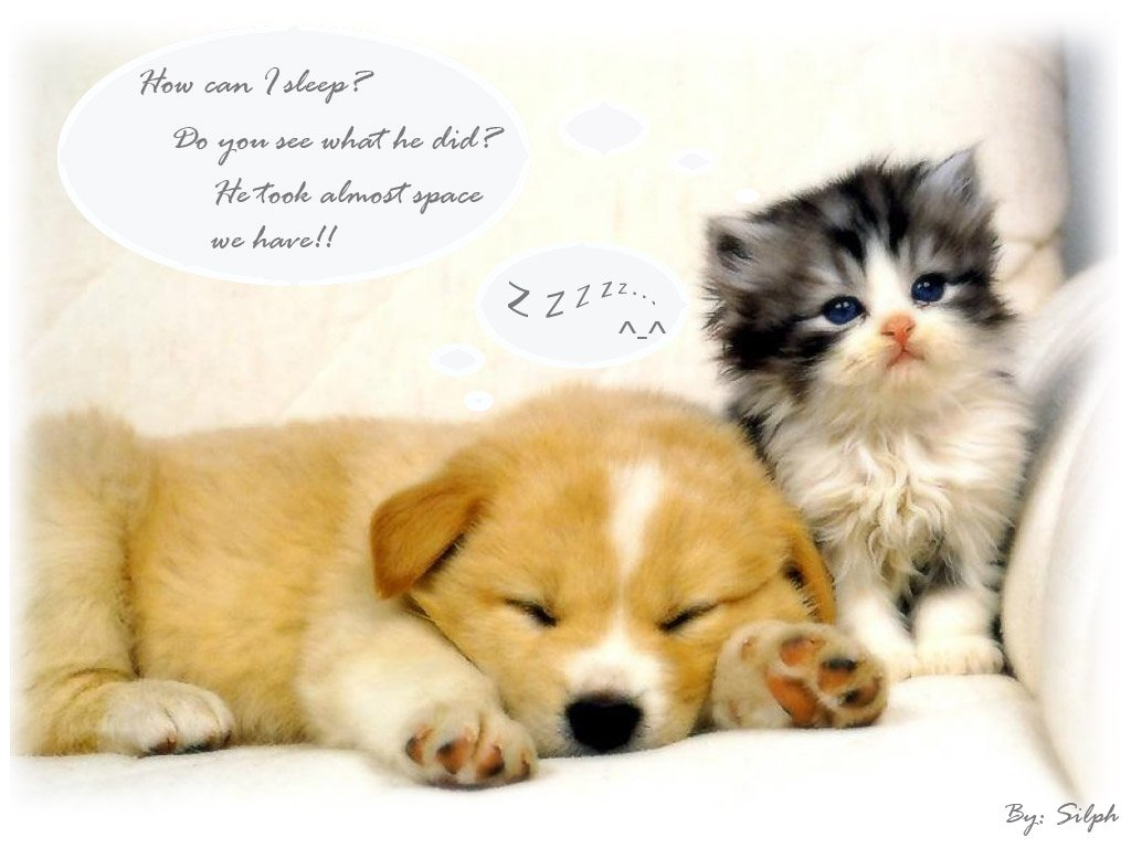 46+] Cute Animal Wallpapers with Sayings on WallpaperSafari