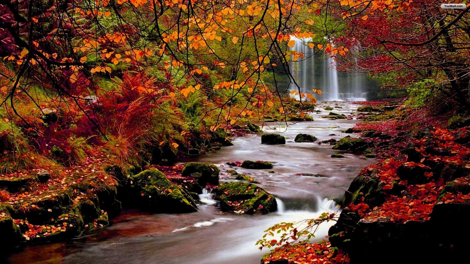 Autumn Forest Waterfall Wallpaper   wallpaperwallpapersfree 1920x1080