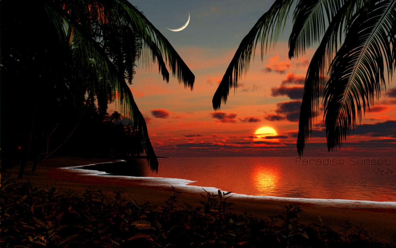 Tropical Sunset Wallpaper Zoom Wallpapers 1368x855