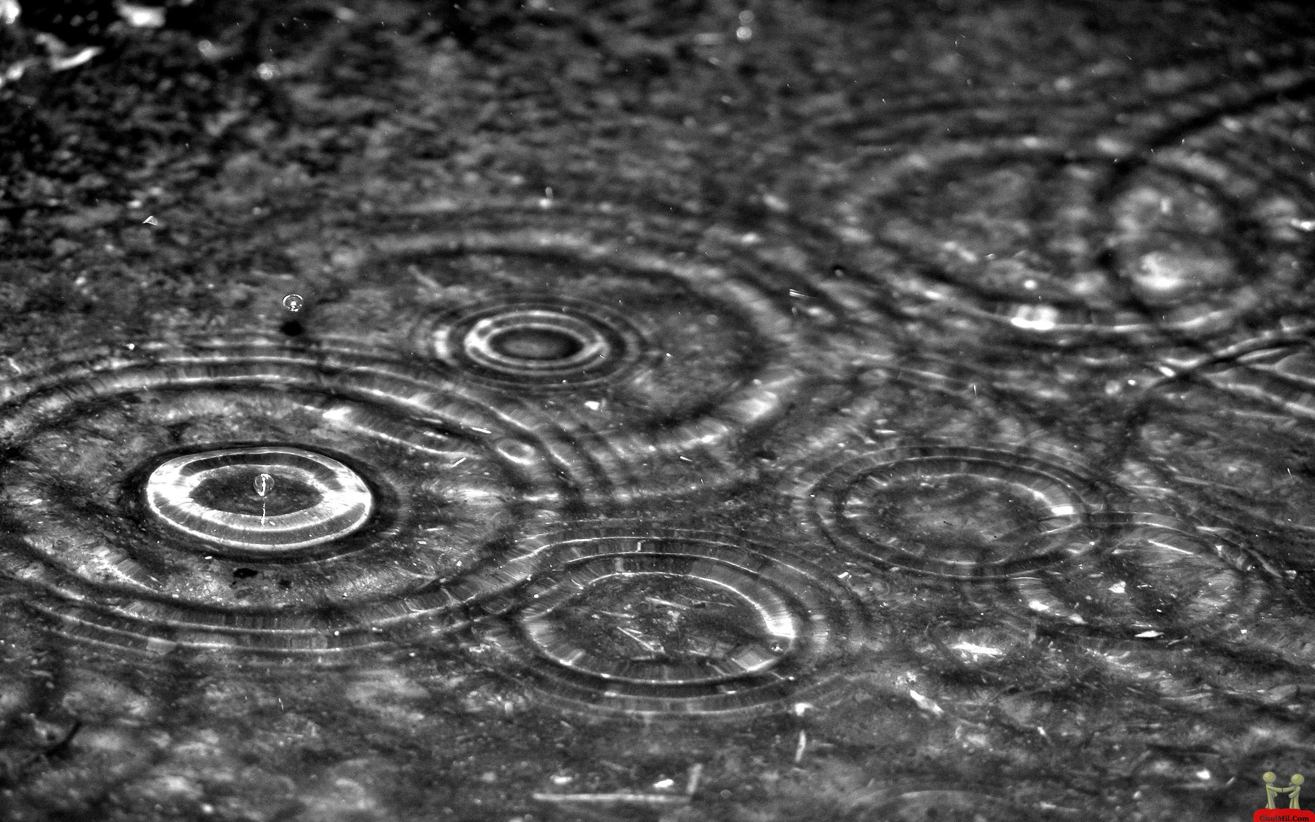 Falling Rain Drops HD Wallpaper HD Wallpapers Download 2560x1600