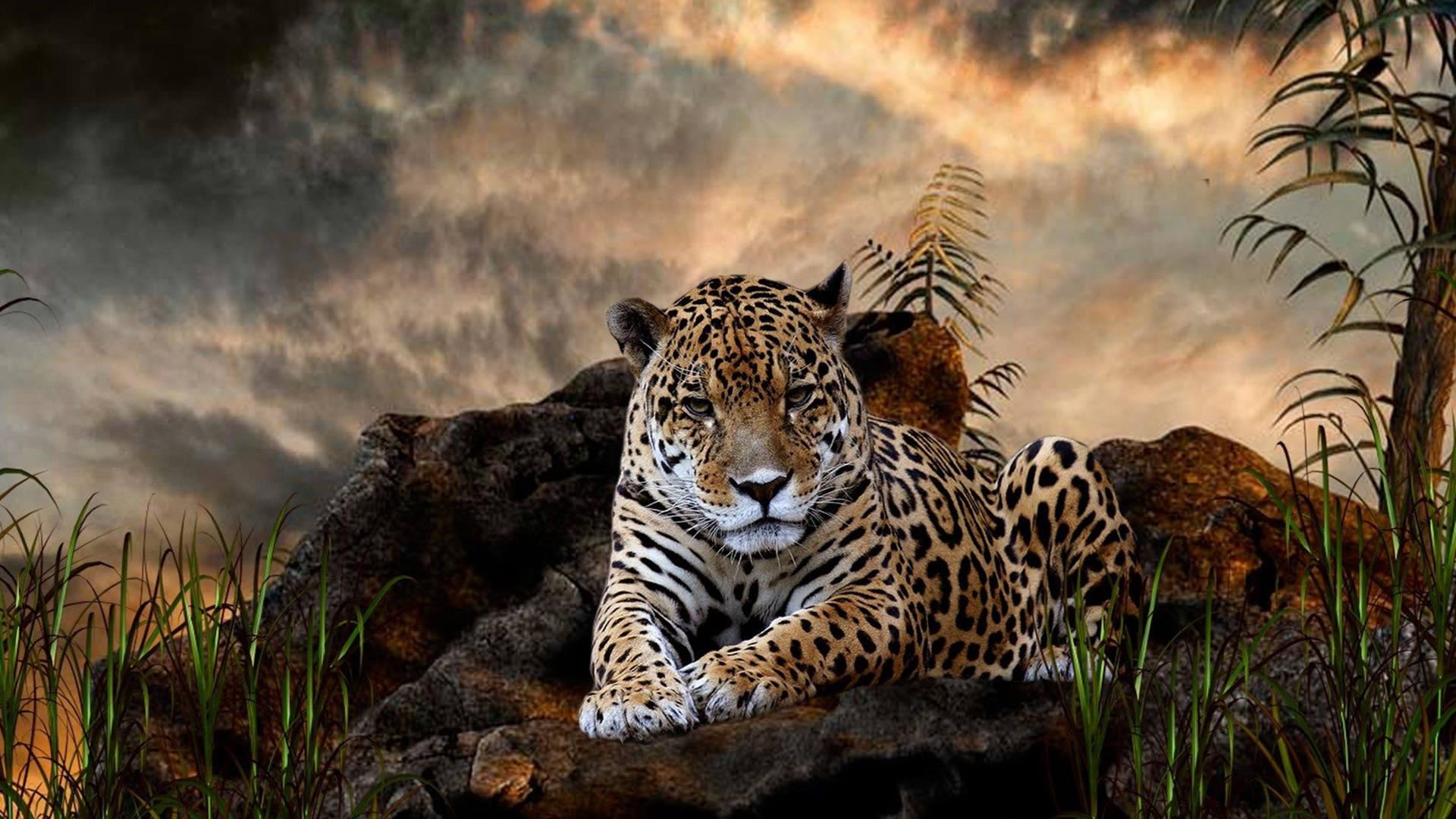Leopard Wallpapers HD 1920x1080