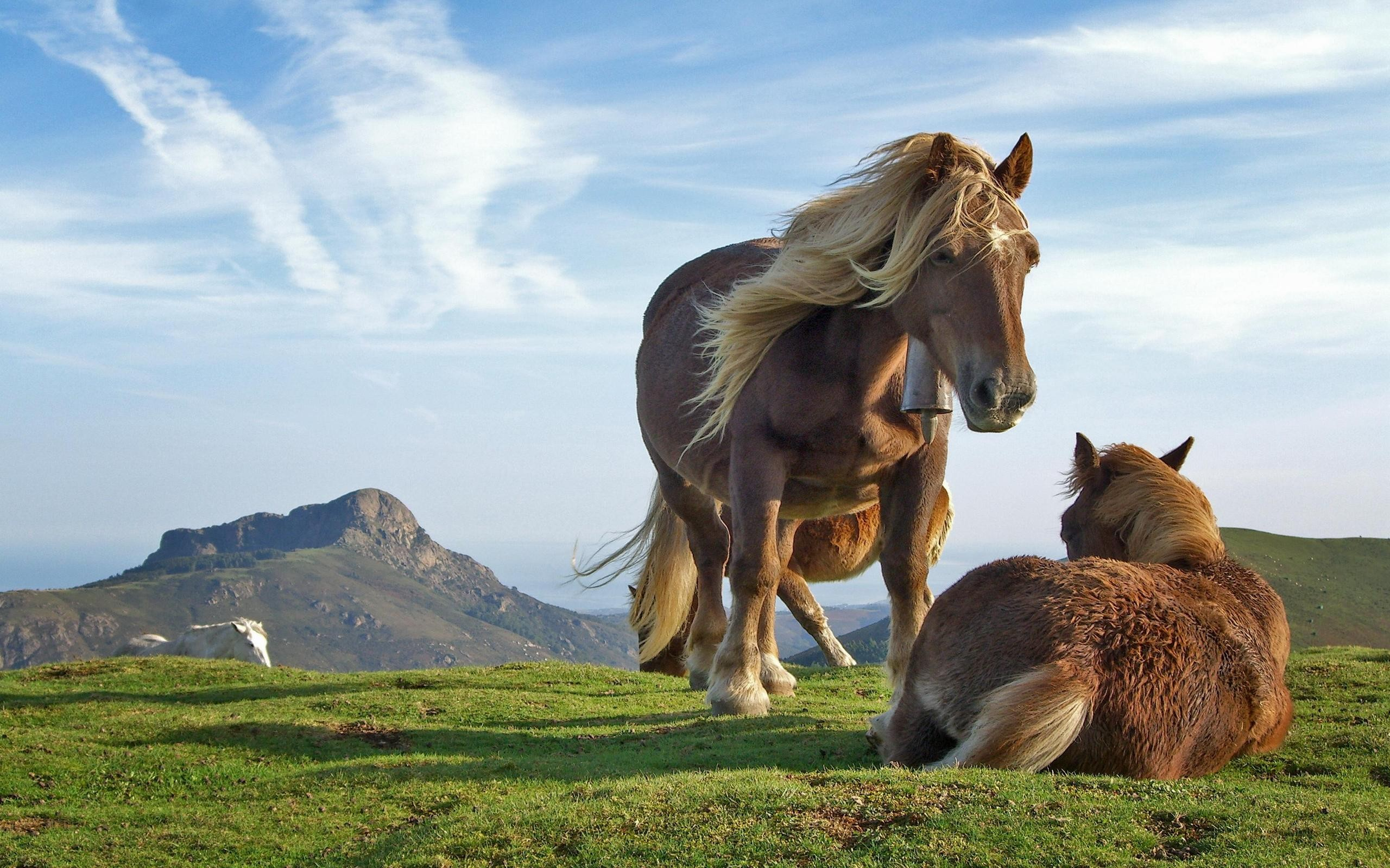 Beautiful horses wallpapers Beautiful horses stock photos 2560x1600