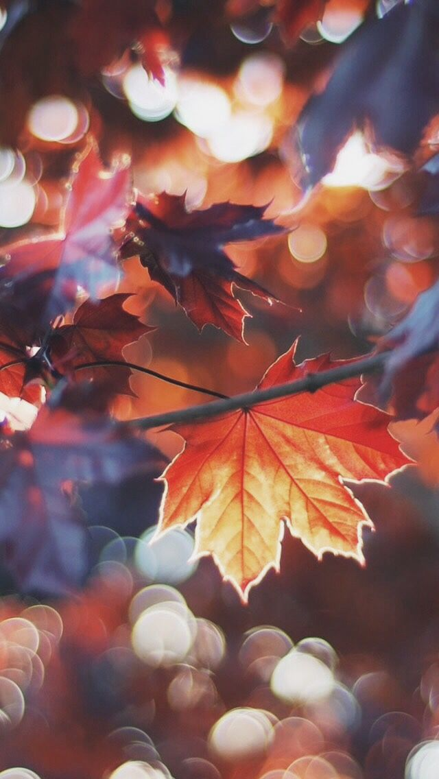 COZY FALL HALLOWEEN fall my favorite season Fall wallpaper 640x1136