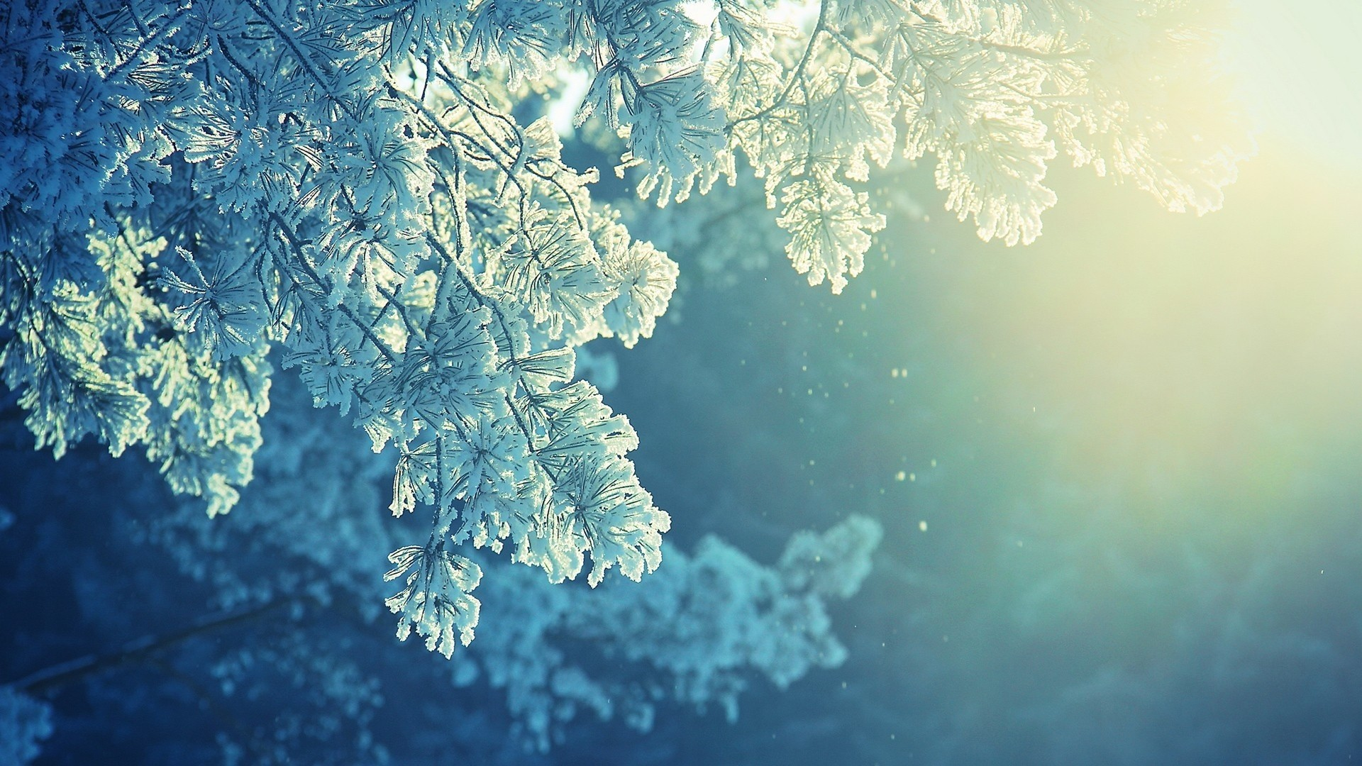 Frost Flakes Mother Nature Trees Soft Sunlight Organic Mac 1920x1080
