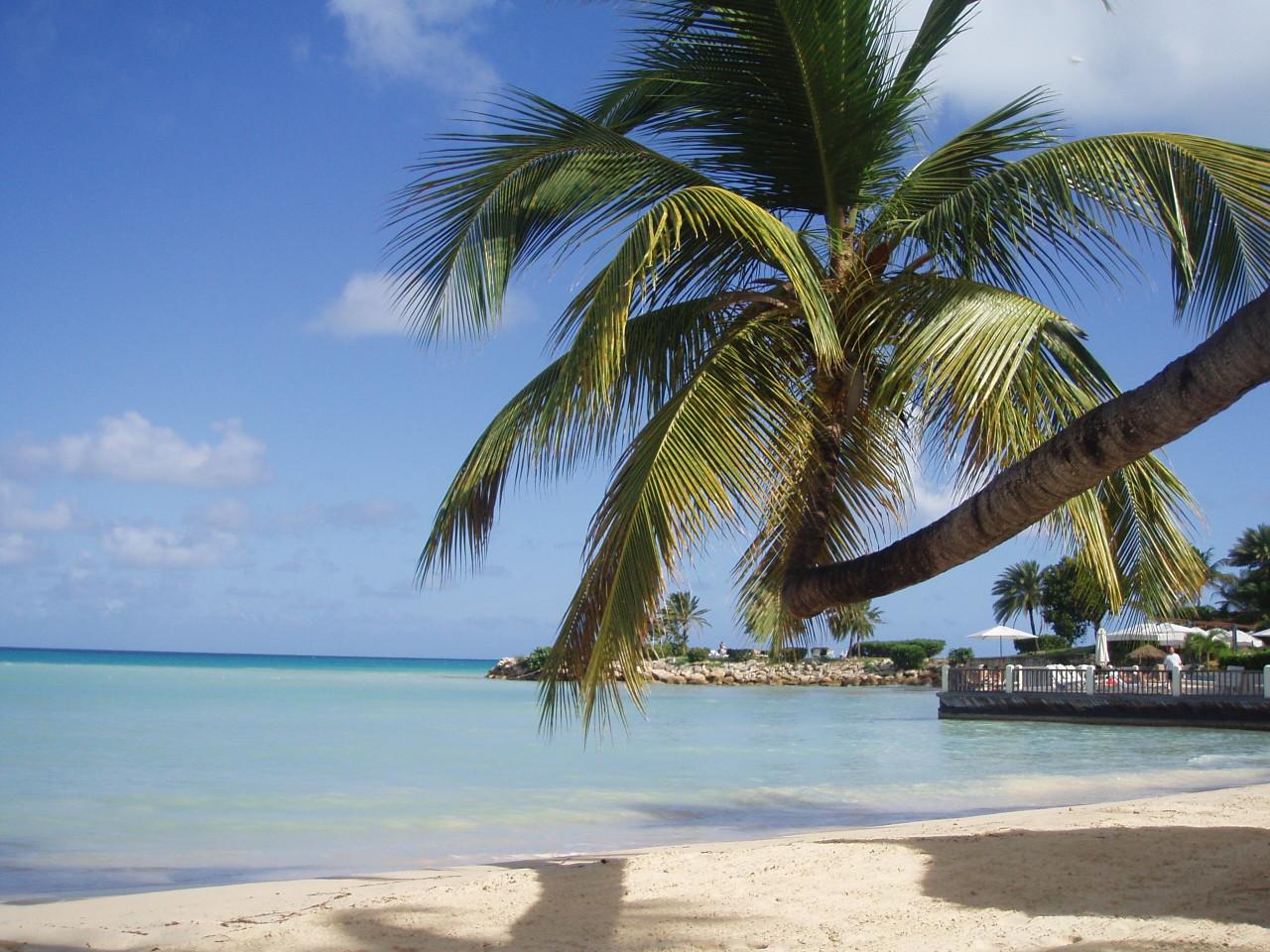 Beach Palm Trees Wallpapers - WallpaperSafari