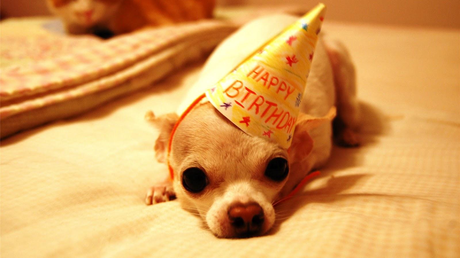 Pics Photos   Funny Happy Birthday 1600x900