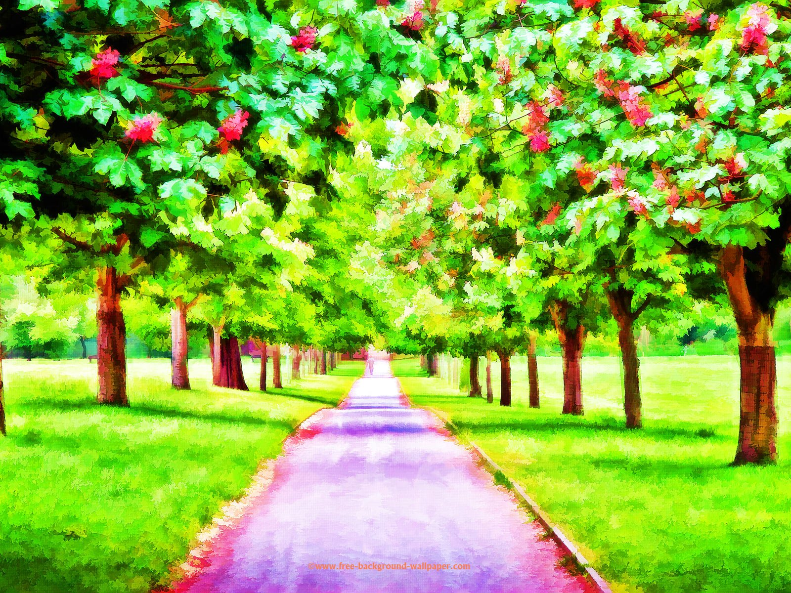 Cherry Tree Walk Beautiful Desktop Background   1600x1200 1600x1200