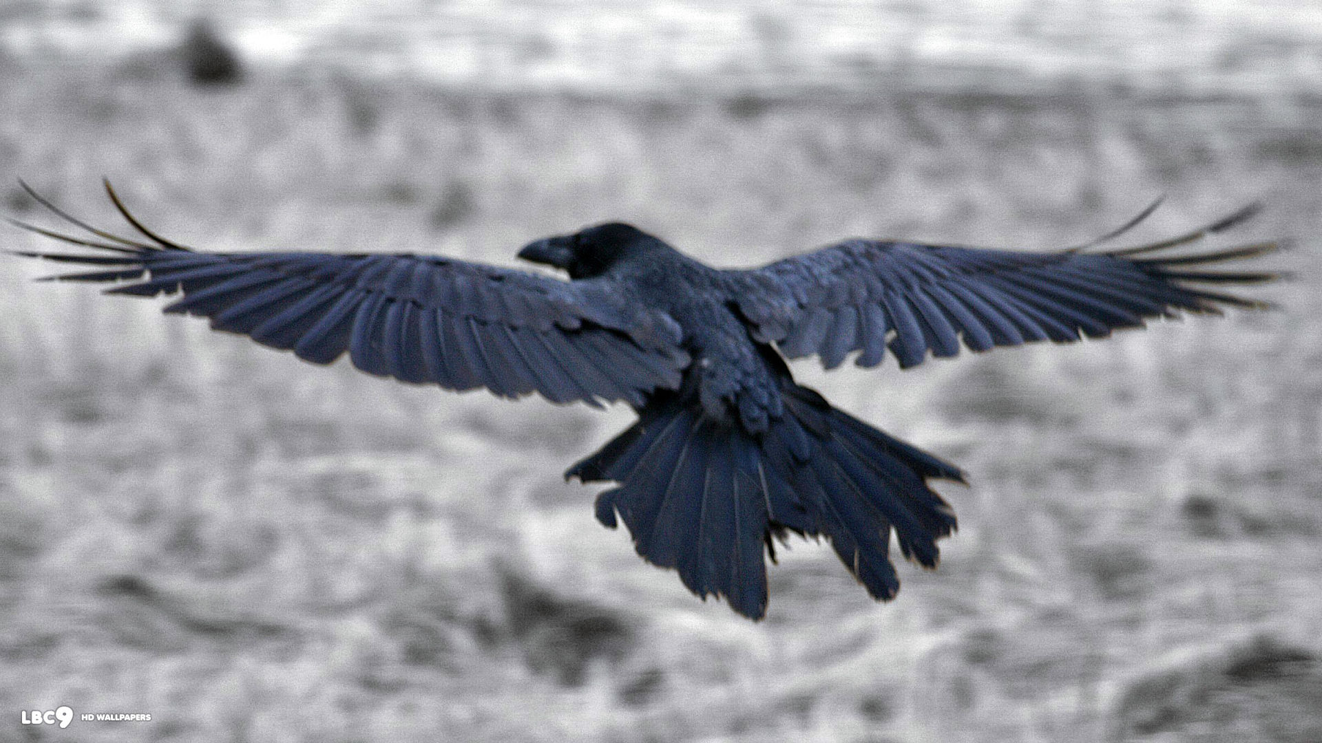 raven wallpaper HD 1920x1080