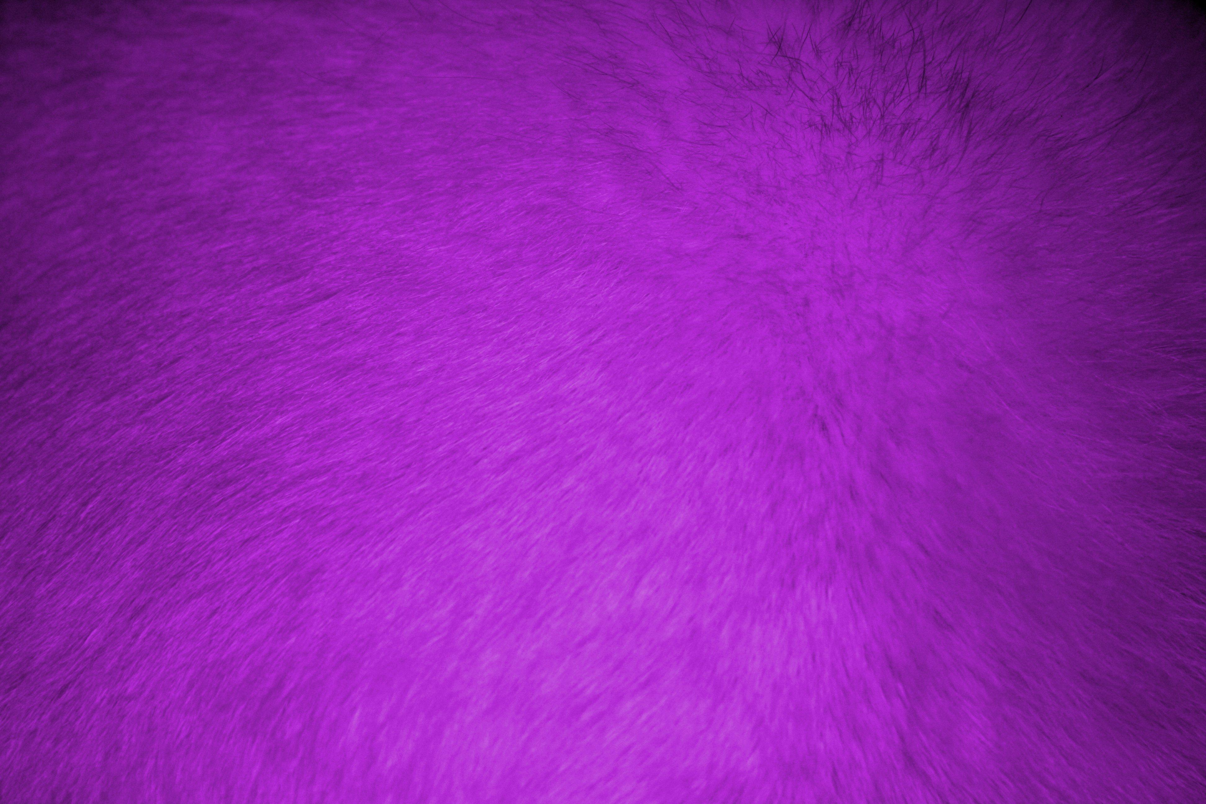 Purple Fur Texture   High Resolution Photo   Dimensions 3888 3888x2592