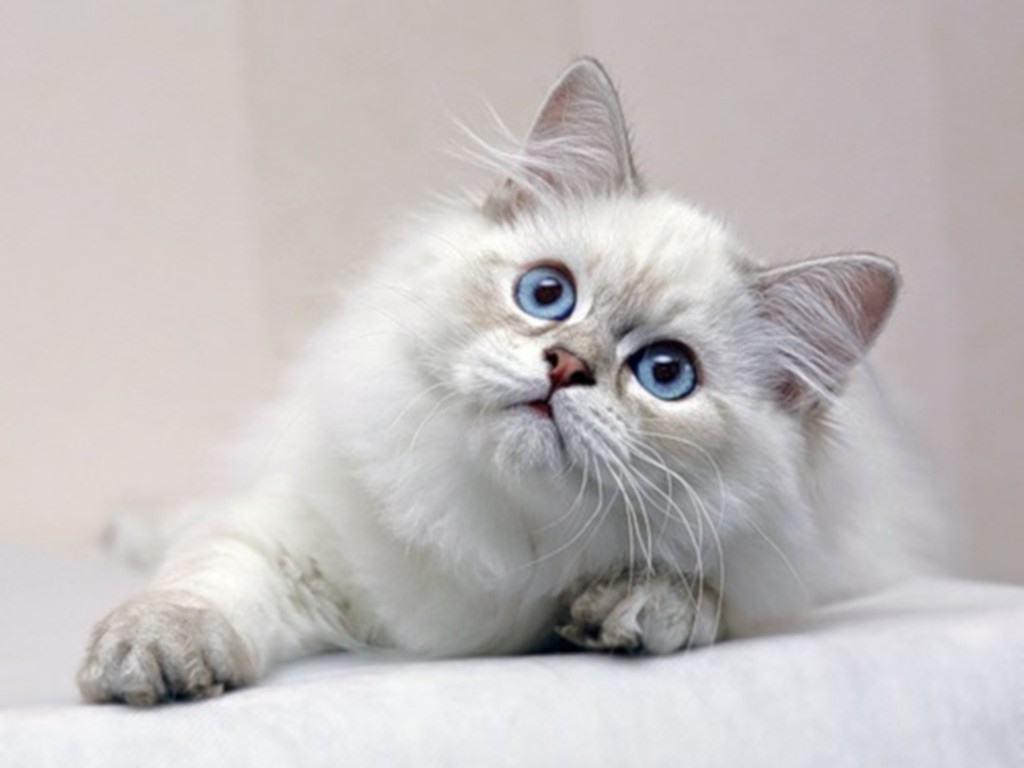 Nice Kitty   Cats Wallpaper 36904982 1024x768