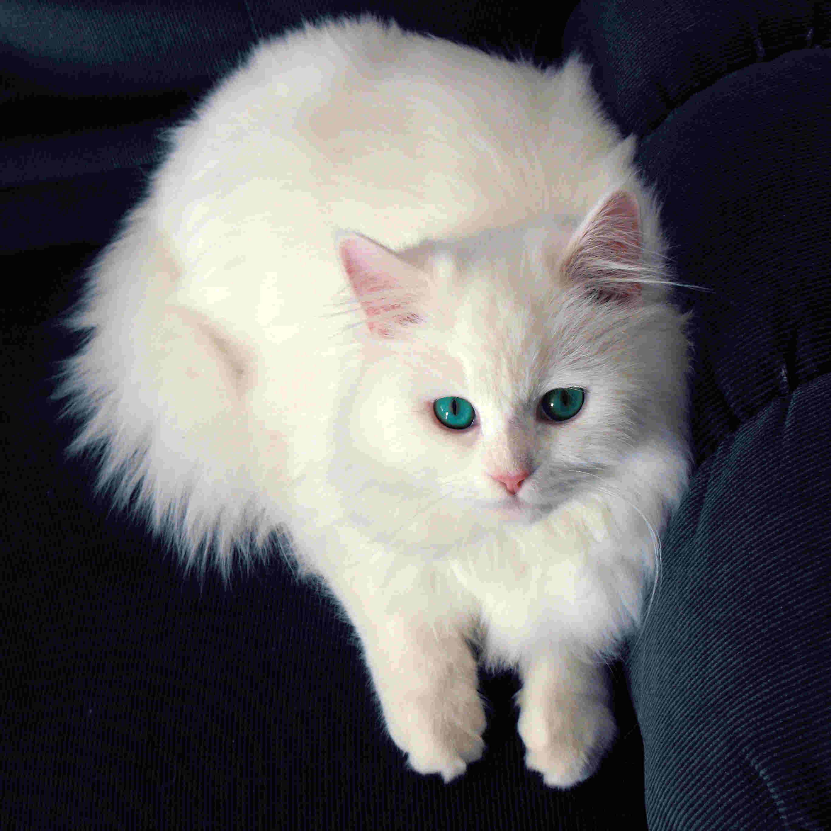 cat urine stain and odor removal