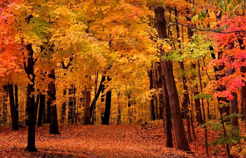 fall foliage 13120268 1667x2592 1024x658 1024x658