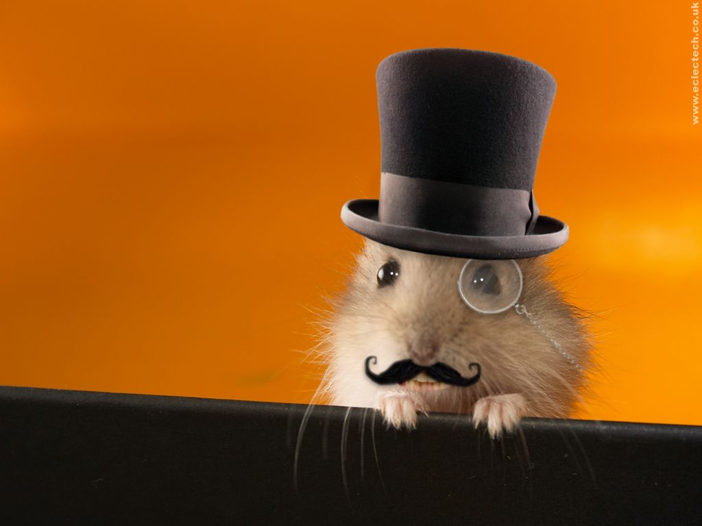 Funny hamsters wallpaper Funny Animal 1024x768