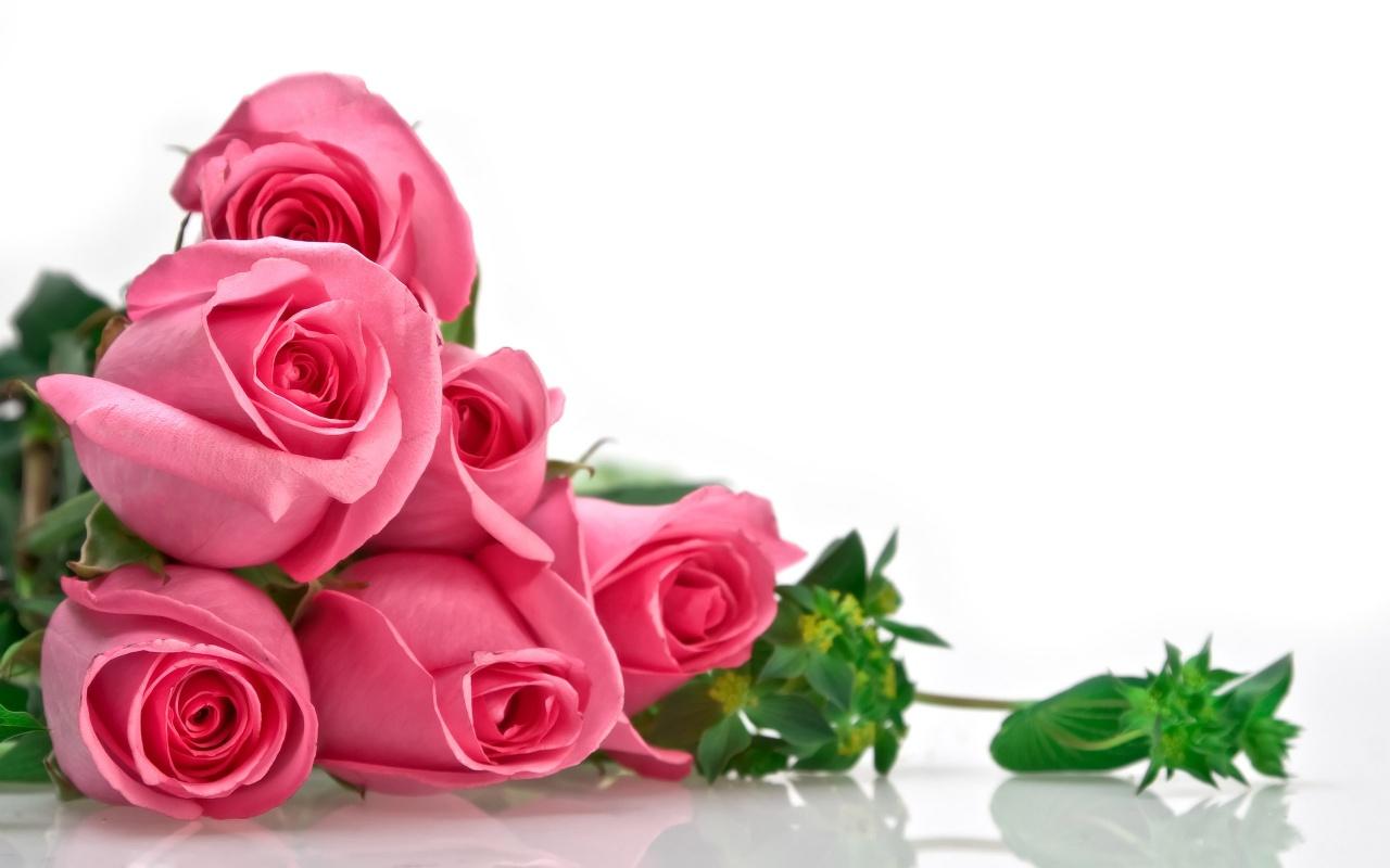 Hd Wallpapers Flowers Love Vinny Oleo Vegetal Info