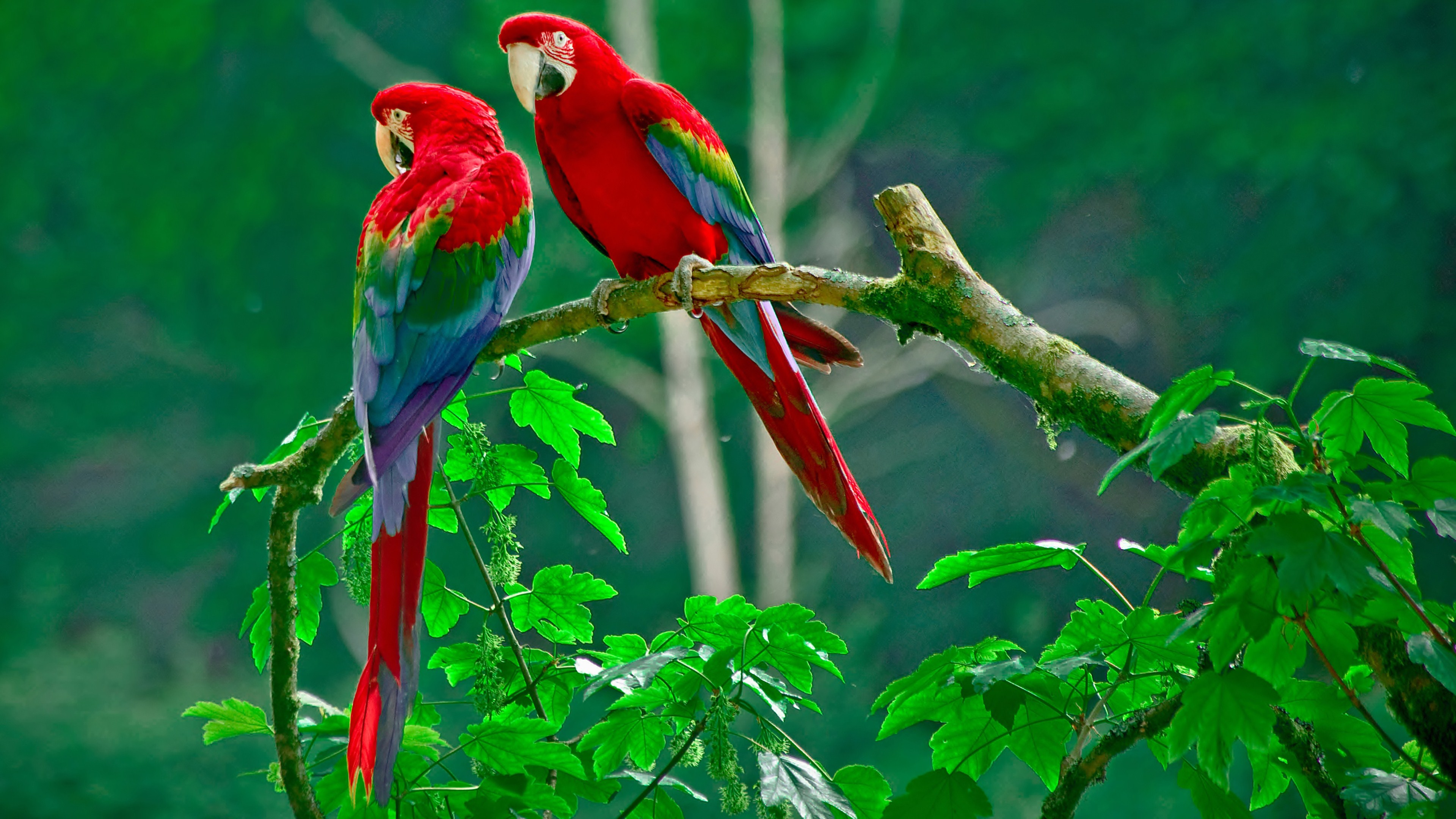 252 Parrot HD Wallpapers Background Images 3840x2160