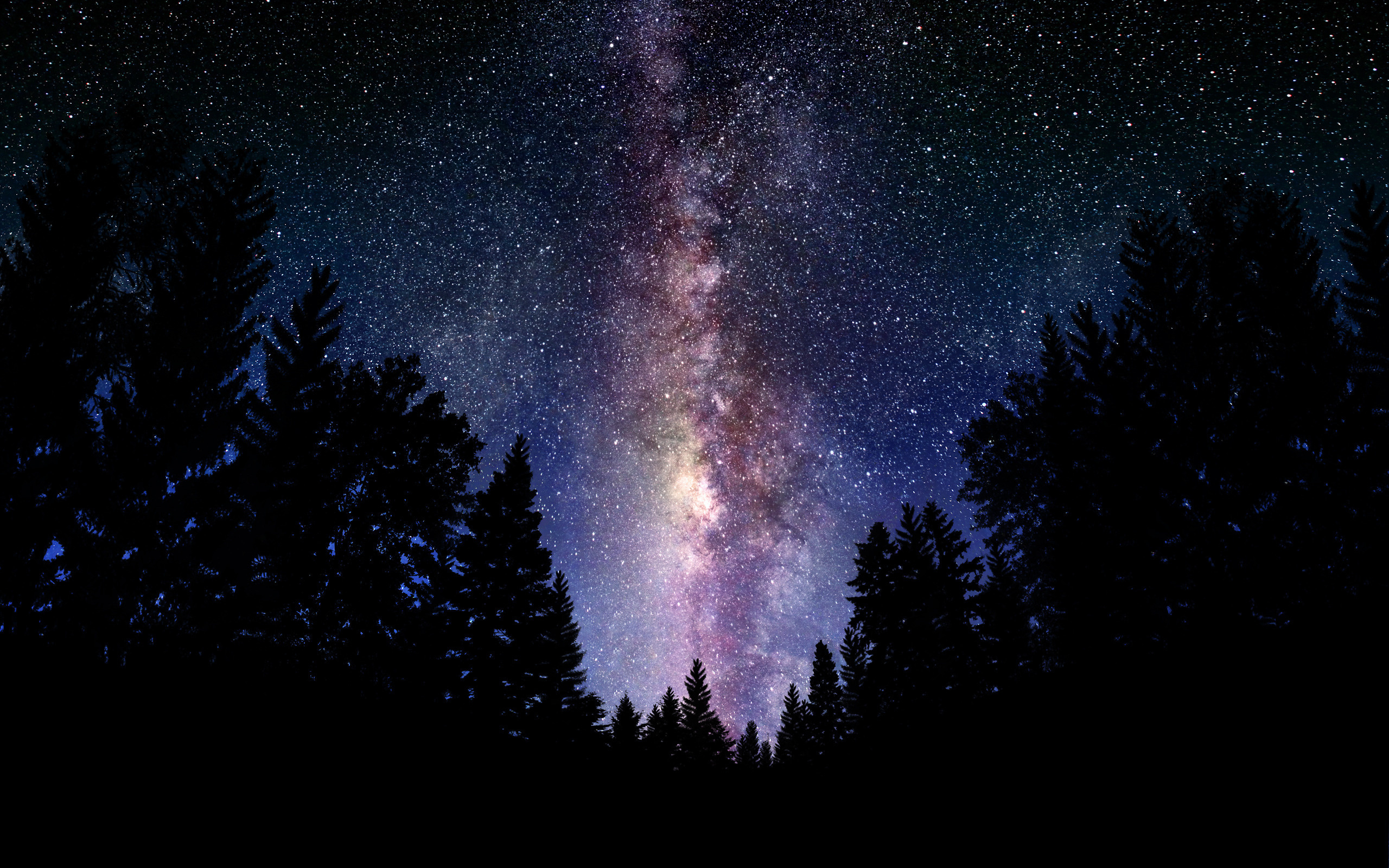 Wallpaper Milky Way sky night stars tree forest desktop wallpaper 2560x1600