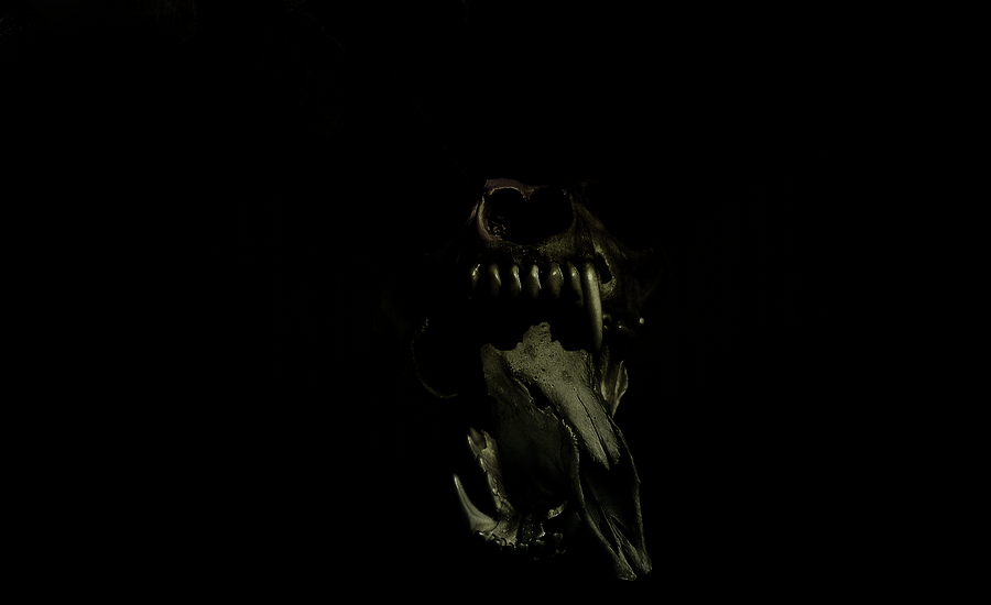 Dark Wolf Wallpaper - WallpaperSafari