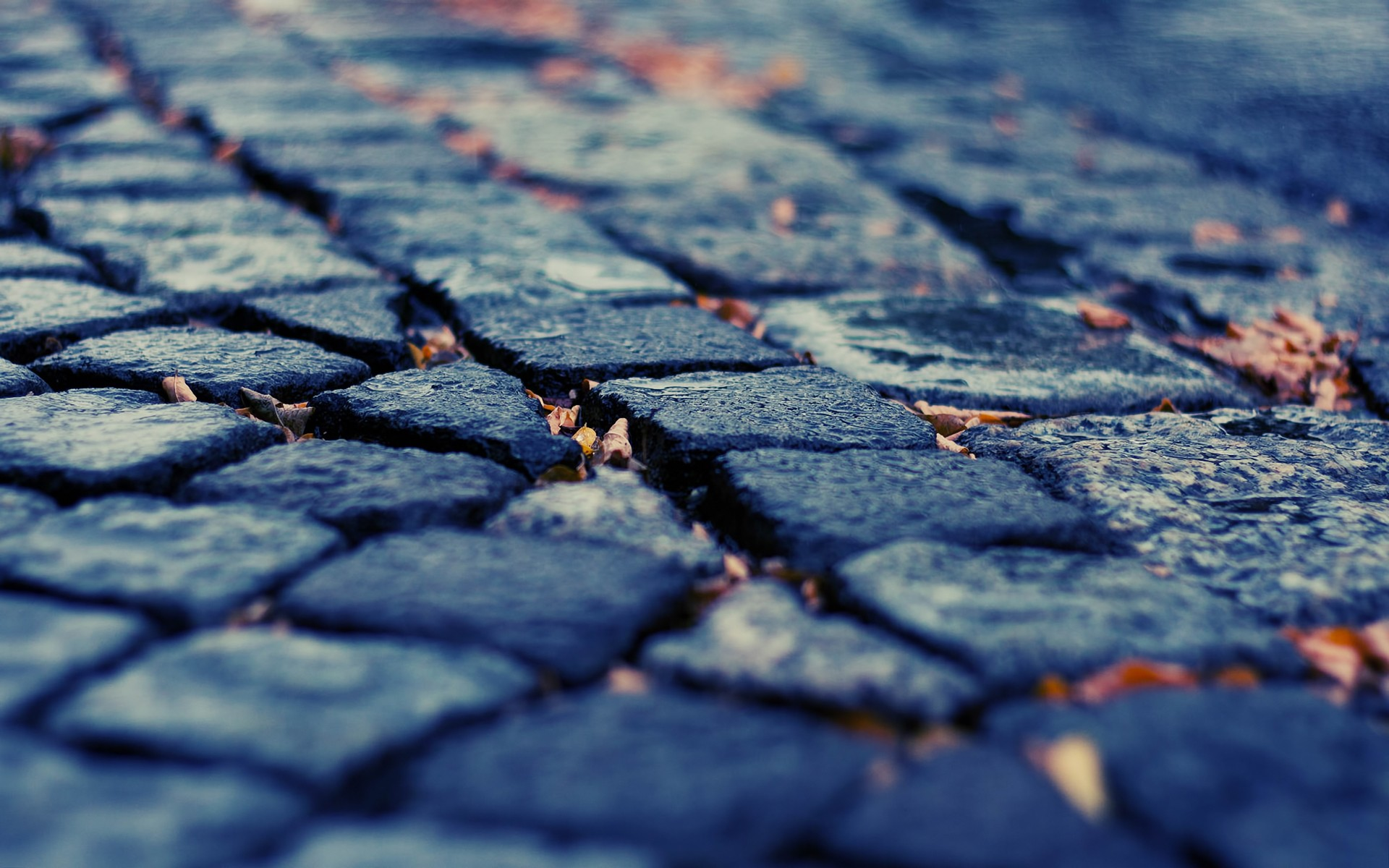Download Wallpaper pavement depth of field cobblestones fallen leaves 1920x1200