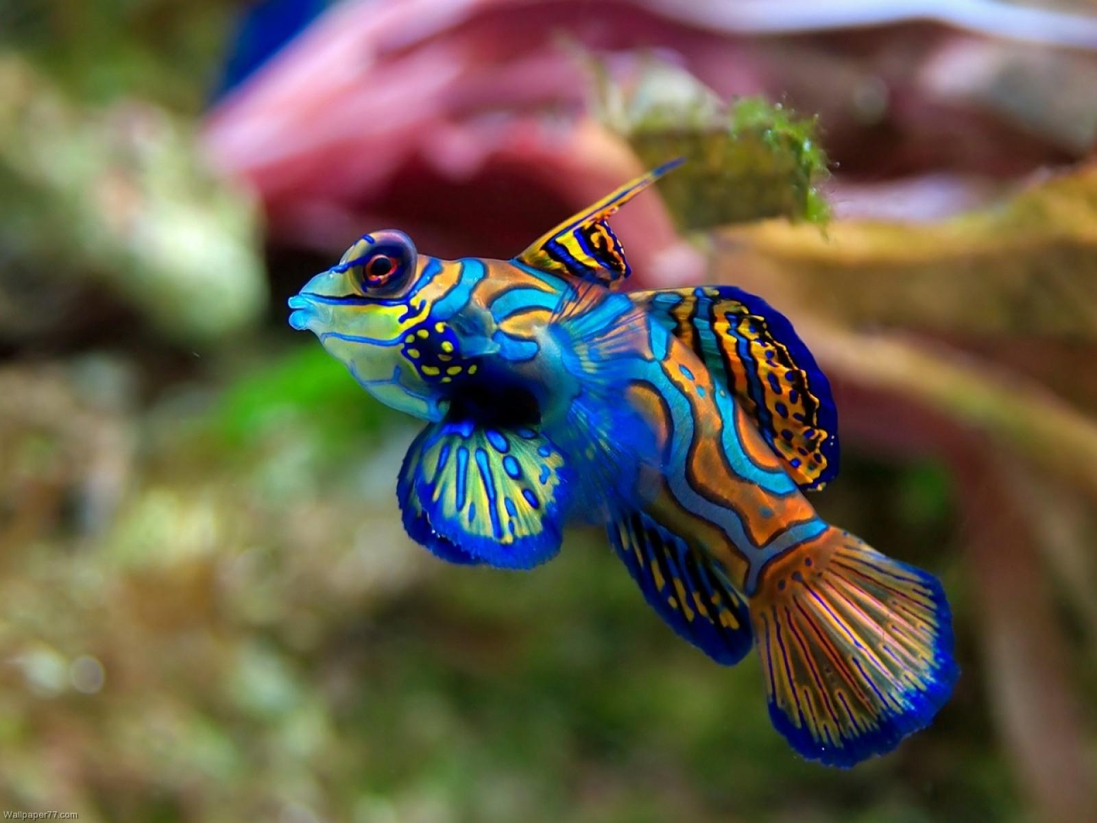 Wallpapers tagged Fish Wallpapers Ocean sea Underwater Water 1600x1200