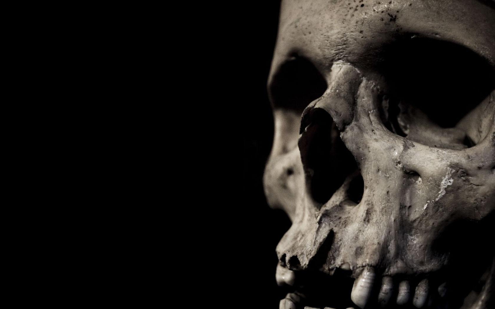 Download Artistic Skulls wallpaper skull close up 1680x1050