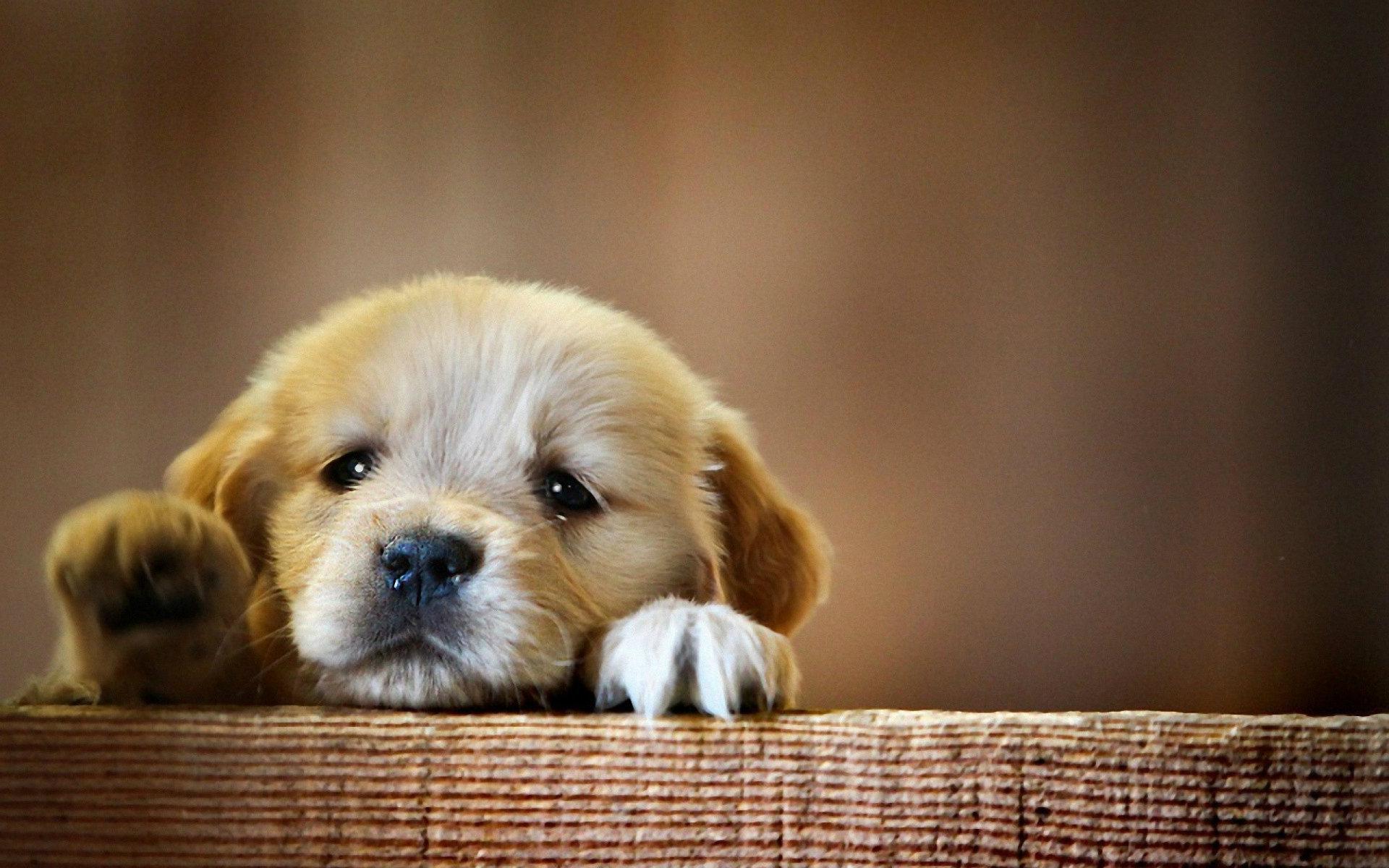 50 Cute Dogs Wallpapers Dog Puppy Desktop Wallpapers 1920x1200