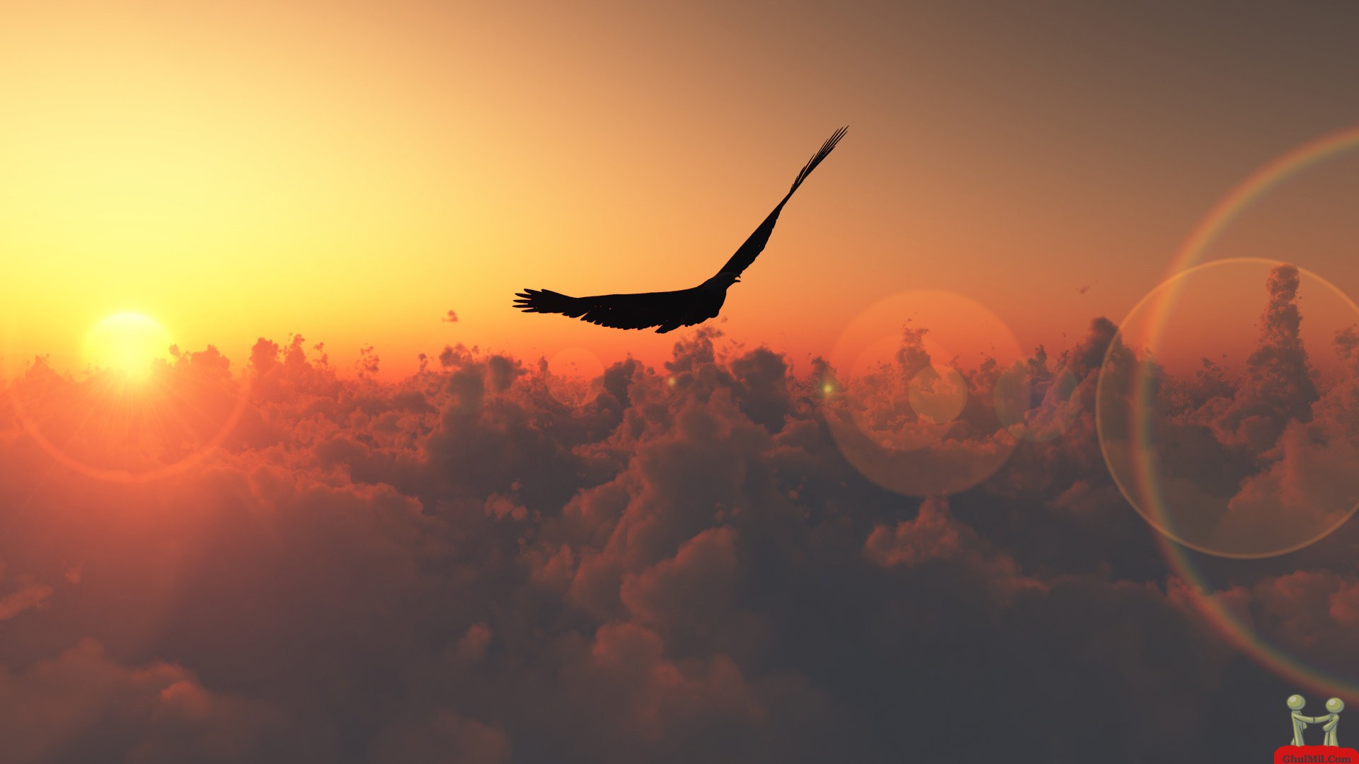 Flying Sunset Eagle HD Wallpaper HD Wallpapers Download 1920x1080