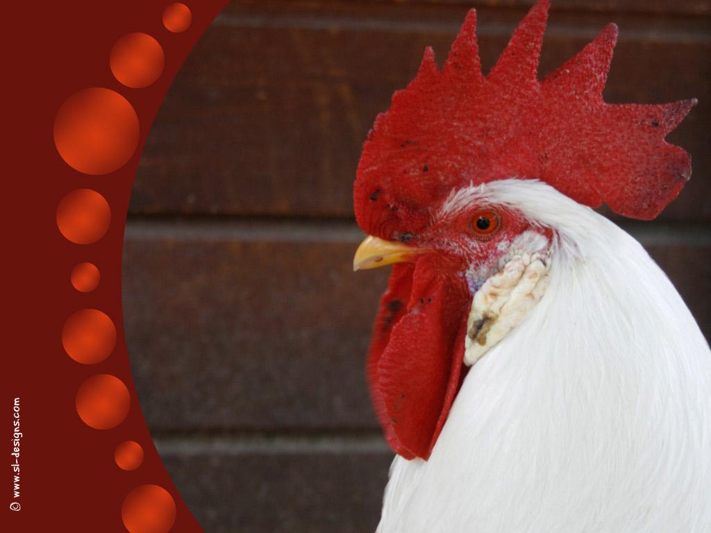 matamu Rooster desktop wallpaper 1024x768