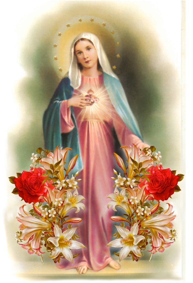 68 best Immaculate Heart of Mary images 736x1079