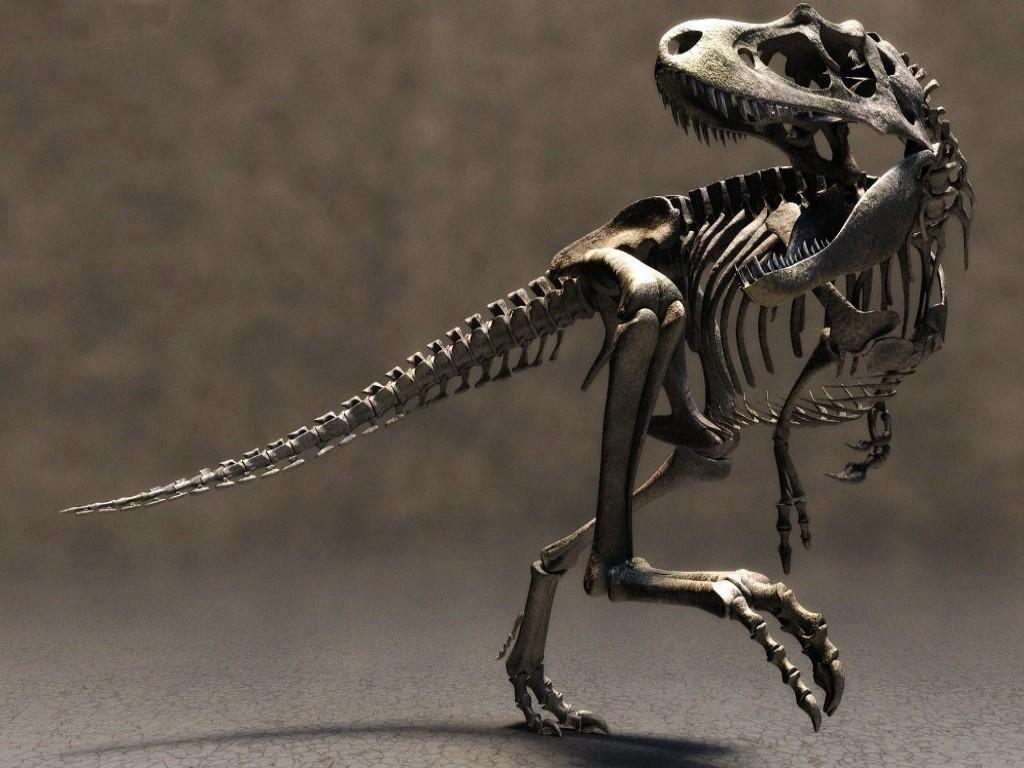 Read more T Rex info 1024x768