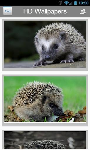 Cute Hedgehog Wallpaper Wallpapersafari