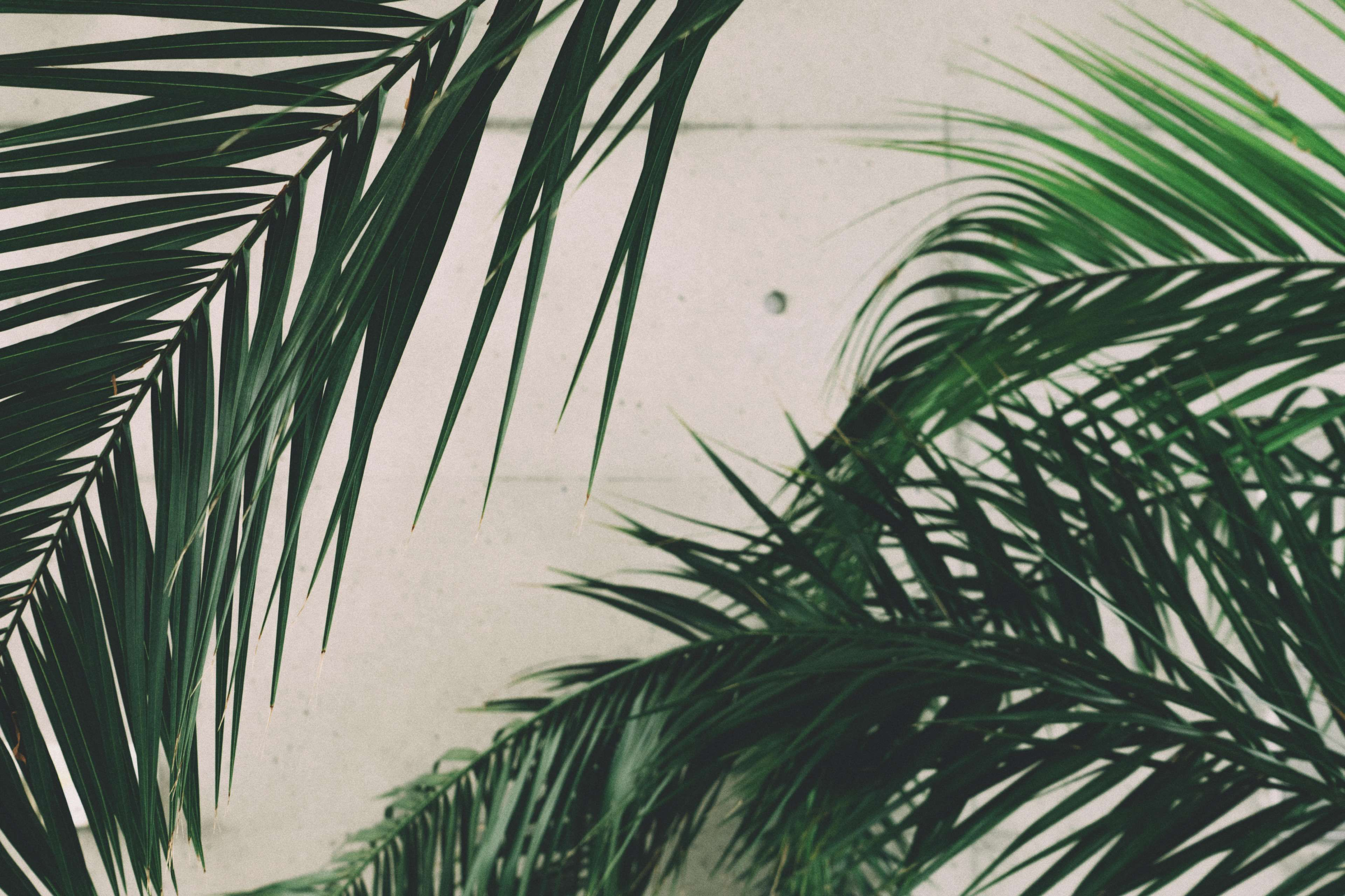 close up concrete green growth leaves nature outdoors palm 3840x2560