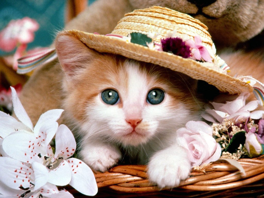 Shes A Lady   Cute Kittens Wallpaper 9820383 1024x768