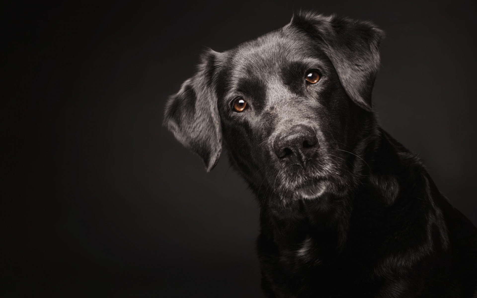 Animal Background Images HD Dog Images Download Dog Wallpapers 1920x1200