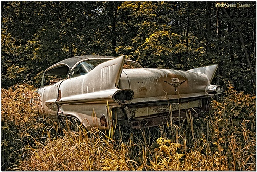 Abandoned Cars And Trucks Photo Pictures