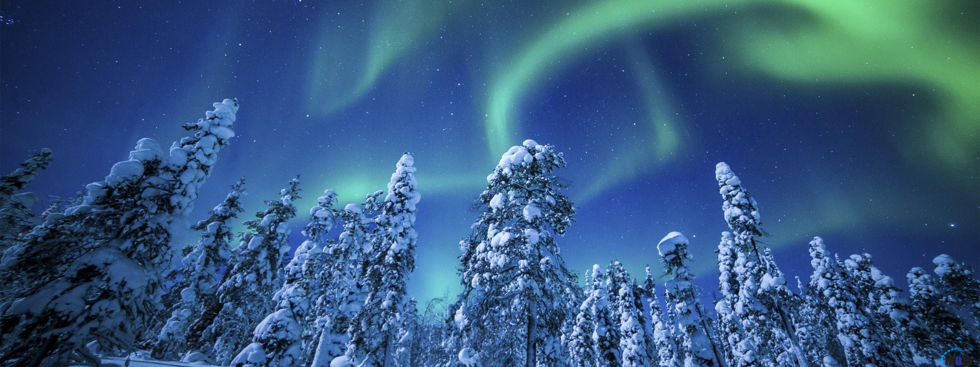 Desktop wallpapers Northern lights over pine forest 3200x1200