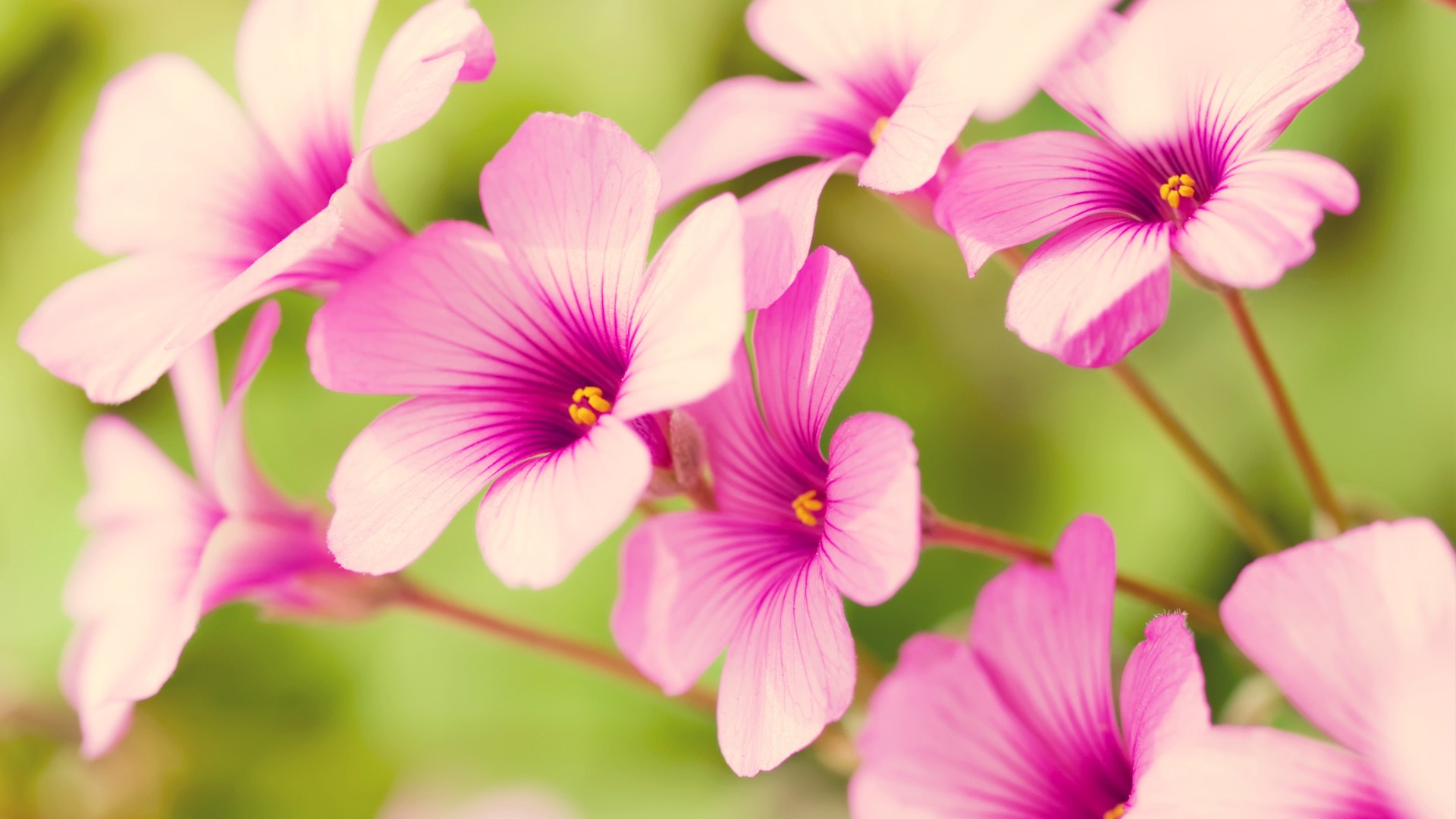 spring flowers 1920x1080