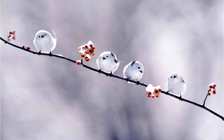 Short Bird Wallpaper photo and wallpaper All Short Bird Wallpaper 1440x900