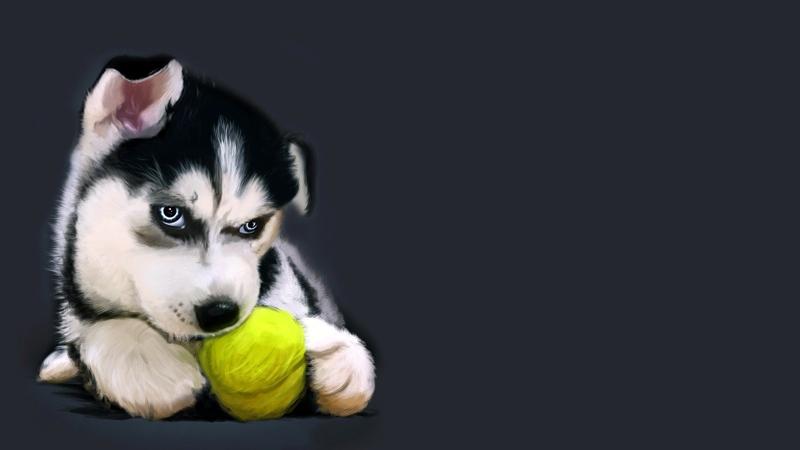 dogs tennis balls 1920x1080 wallpaper Animals Dogs HD Desktop 800x450