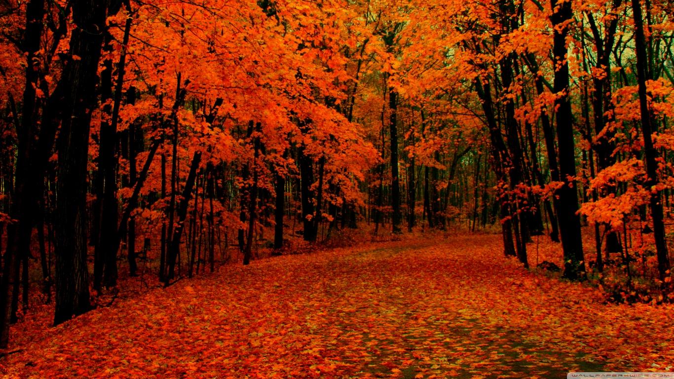 fall wallpaper hd Download 1366x768