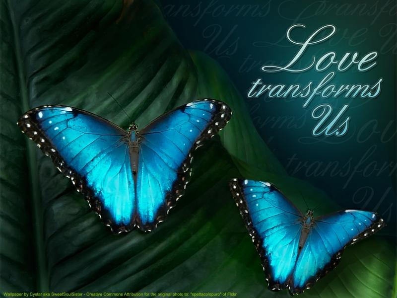 blue Love Transforms Us Animals Butterflies HD Desktop Wallpaper 800x600