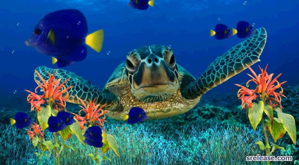 Coral Reefs Wallpapers 1024x566 pixel 3d HD Wallpaper 5741 1024x566