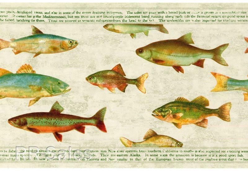 Fish Rustic Green Cabin Man Cave Lodge Fishing Wallpaper Wall Border 800x554