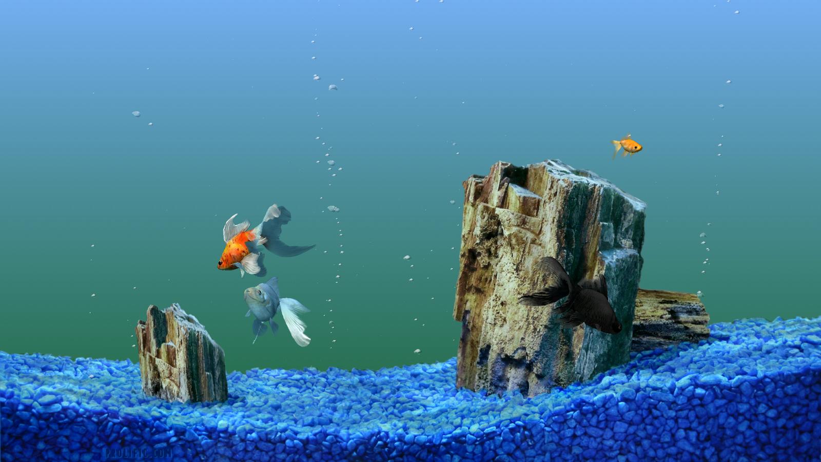 Virtual fish tank aquarium google - Kelsey Chen Fish Tank Wallpaper Hd