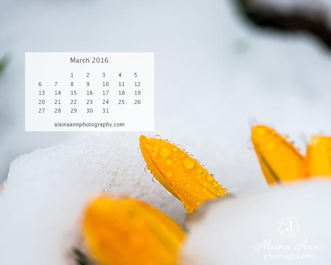 March 2016 Wallpaper Calendar Alaina Ann Photography 650x520