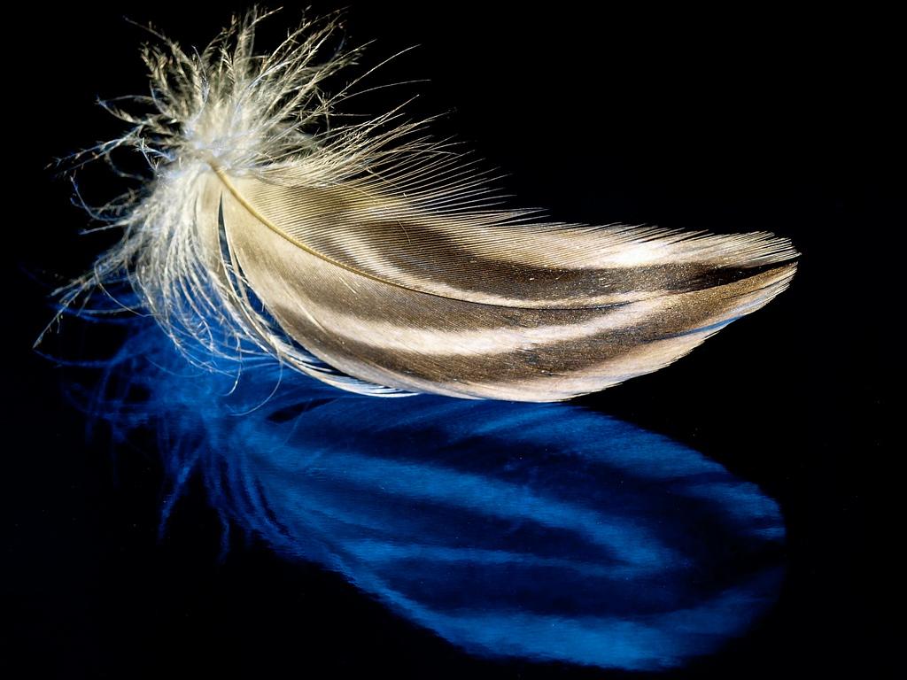 Blue Feather Gold wallpaper   ForWallpapercom 1024x768