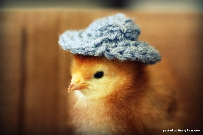 Free Download Cute Baby Chicken Wallpaper Cute Chicken Baby