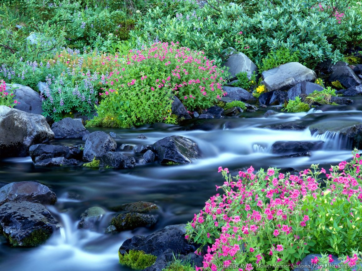 Nature wallpaper flower in the rocky river Urban Art Wallpaper 1152x864