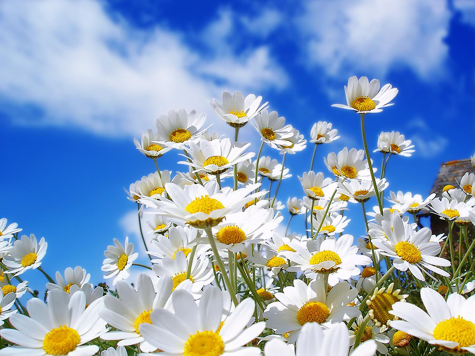 wallpapers Radiant Flowers Wallpapers 1600x1200